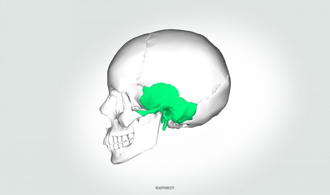 Bone conduction headphones need to sit on the temporal bone